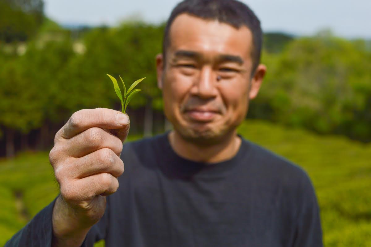 tea producer, Mr. Iwata